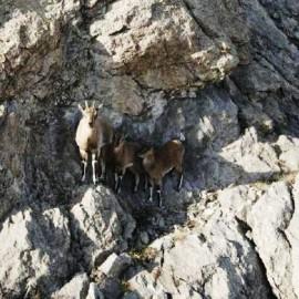 Sivas Çıkışlı Tecer Dağı Trekking Turu